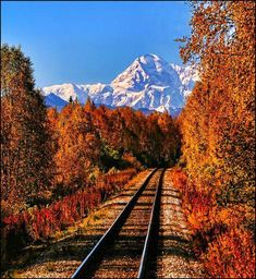 I love the train rides in Alaska! Train Tracks, Train Rides, Train Trip, The Places Youll Go, Places To See, Beautiful World, Beautiful Places, Parcs, Dream Vacations