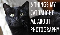 6 Things My Cat Taught Me About Photography ... http://www.diyphotography.net/6-things-cat-taught-photography