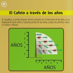Finca Cafetera Santander by Comité Café Santander - issuu