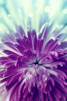 Purple flower by Serazetdinov on @creativemarket