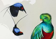 """""""Long-tailed manakin, left, and a resplendent quetzal."""" Detail of Cornell Lab of Ornithology mural, """"From So Simple a Beginning: Celebrating the Evolution and Diversity of Birds""""; painted by Jane Kim (http://inkdwell.com/about/)"""