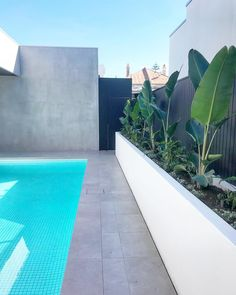 All done @ Henley Beach! amazing palette, white pool tiles, white planters, Concrete grey porcelain pavers, black tongue in groove cladding… - All For Garden Bluestone Pavers, Pool Pavers, Backyard Pool Landscaping, Concrete Pool, Backyard Pool Designs, Swimming Pools Backyard, Pool Tiles, Concrete Tiles, Grey Pavers