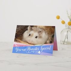Shop HammyVille - Cute Robo Hamster Special Holiday Card created by HammyVille. Robo Dwarf Hamsters, Robo Hamster, Cute Hamsters, Valentine Special, Love Valentines, Roborovski Hamster, Hamster Names, You Are Special, Cards For Friends