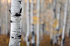 Tip for fall landscape photography: Use a wide aperture to isolate the subject (via Dusty Doddridge)
