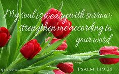 Psalm 119:28 (NAS) My soul weeps because of grief; Strengthen me according to Your word.   https://www.facebook.com/OurPrayer/photos/10155573425746703