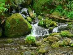 lush green forests outside Forks, Washington Forks Washington, Washington State, Olympic National Forest, Lush Green, Planet Earth, Forests, Waterfall, Places To Visit, Leaves