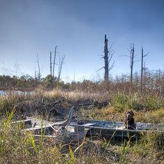 Luke, a Labrador Retriever, in Clover Hill, Mississippi. Photo: Nell Dickerson