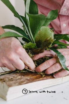 Garden DIY: Mounting A Staghorn Fern  |  The Fresh Exchange: