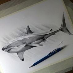 My drawing of a great white shark!  Time lapse video: www.youtube.com/watch?v=Dsd61_… Let me know what you think.…