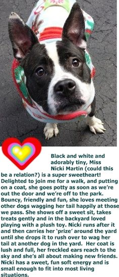 SAFE 1-14-2016 BY HEAVEN CAN WAIT RESCUE NY - THANK YOU SO MUCH!! Manhattan Center NICKI MARTIN – A1061412 FEMALE, BLACK / WHITE, PIT BULL MIX, 2 yrs, 6 mos STRAY – STRAY WAIT, NO HOLD Reason STRAY Intake condition UNSPECIFIE Intake Date 12/25/2015 http://nycdogs.urgentpodr.org/nicki-martin-a1061412/