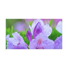 Rhododendron After the Rain Gallery Wrap Canvas