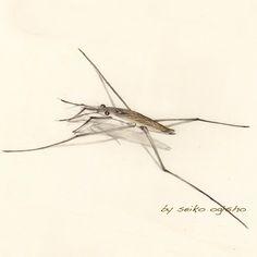 アメンボ Pictures Of Insects, Pictures To Draw, Colored Pencils, Spider, Animals, Animales, Colouring Pencils, Animaux, Crayons