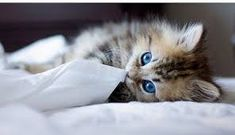 Image result for cutest cat in the world 2017