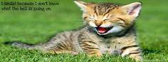 Funny cat timeline cover banner