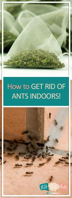 How to Get Rid of Ants Indoors Indoor Ant Repellent Indoor Ant Killer Indoor Ant Killer Spray Pest Control Ant Killer Recipe, Homemade Ant Killer, Ant Killer Spray, Ant Spray, Spider Killer, Best Pest Control, Bug Control, Ants In House, Get Rid Of Ants