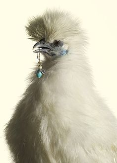 Peter Lippmann for MARIE CLAIRE. Chicken models. Rings as crowns. And it works so well!