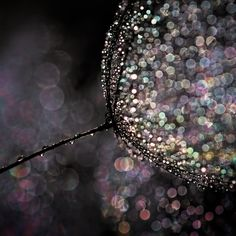 Learn how to create eye-catching bokeh in this cool and easy tutorial!