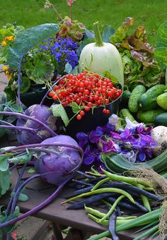 Planning a summer vegetable garden - perennial crops, unusual varieties, creating a sowing calendar