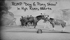 RCMP-Dog-and-Pony-Show Pony, Police, Horses, River, Animals, Pony Horse, Animaux, Law Enforcement, Horse