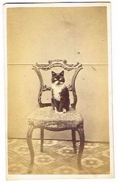 Old CDV Photograph Cat on Upholstered Chair Antique Unknown Studio Photo 1860s | eBay