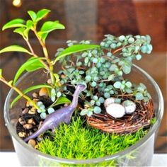 Learn how to make a prehistoric terrarium! fun idea i think that i would spray paint forest animals and faries