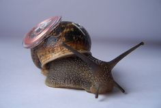 Real Snail Mail by boredomresearch, via Flickr