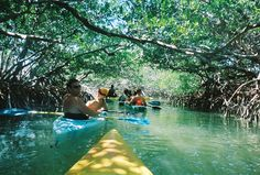 Kayaking through mangrove trees, Key West, FL very cool!! Will always remember seeing the Portuguese Man Of War jellyfish!!