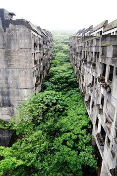 Urban structure reclaimed by nature
