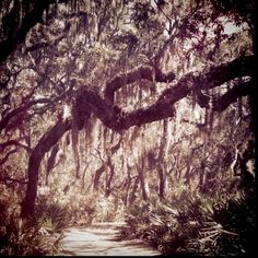 Cumberland Island, GA.... Gah, I want to visit the South! @Jenni Larson, How much longer are you down there??