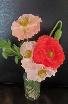 Poppy Fruit Cocktail - Bedding - By Location - Flowers Border Plants, Seeds Online, Home Flowers, Early Spring, Shades Of Red, Dream Garden, Perennials, Floral Arrangements, Poppies