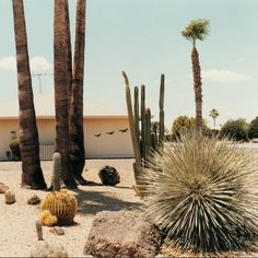 Livestock Farming, My Ghost, Sun City, Weed Control, Red Dead Redemption, Farm Gardens, Color Photography, Palm Springs, Cactus Plants