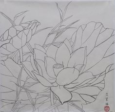 2013-05_Water Lily-荷花