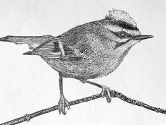 Goudhaan 2017 Fine Art, Bird, Illustration, Animals, Animaux, Birds, Illustrations, Animal, Animales