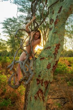 Fever Tree – Acacia xanthopholea - Treegirl: Intimacy with Nature