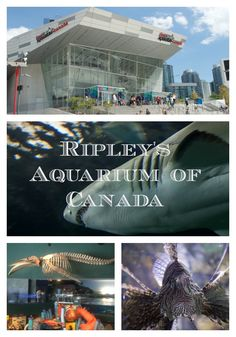 """ripleys aquarium of canada"""