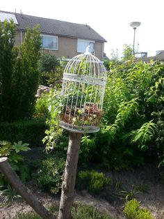 vogelkooi op een afgezaagde stam. kokosmat van een basket erin, wat grond, plantjes en leuk resultaat