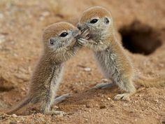 Little kiss