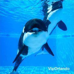 SeaWorld  #Orlando Thematic Park of sea´s animals /  Parques temáticos de animales marinos