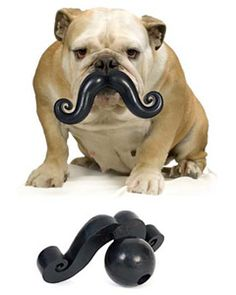 Mustache dog toy, as modeled by a gentlemanly bulldog!!