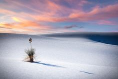 White Sands National Monument is like nowhere I have ever been. Miles of dove white sand dunes cascade into the horizon with the occasional solitary Yucca Plant basking in the sun.