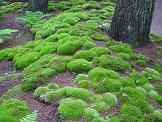 I love moss. Terrarium Diy, Water Garden, Garden Plants, Garden Painting, Garden Stones, Exotic Flowers, Plein Air, Shade Garden, Horticulture
