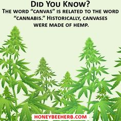 """Did You Know?   The word """"canvas"""" is related to the word """"cannabis."""" Historically, canvases were made of hemp.  #honeybeeherb #enail #dabs #dabsrus #dabsdaily #710society #errlando #miamistoners #floridadabbers #washingtondabbers #oregondabbers #coloradodabbers #pittsburghdabbers #tampastoners #canadiandabbers #420🍁 #420 #nycstoner #banger #bangers #quartz #headyglass #eastcoastdabbers #oil #420industry"""