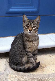 Cat on Samos Greece