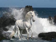 White Horse running on the shore line