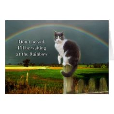Buy 'Cat Sympathy Card' by Eve Parry as a Greeting Card. Sympathy card for someone who has lost a pet cat. The cat from my sisters original photo. RAINBOW BRIDGE Just this side of heaven is a place called Rainbow Bridge. 