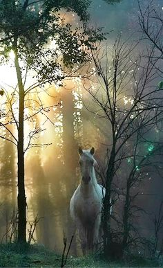 Beautiful horse in light