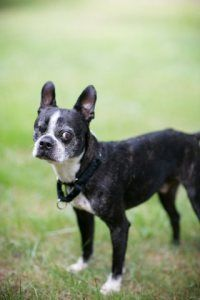 What You See Is What You Get: A Senior Dog Who Needs Love