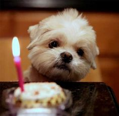 """""""Ugh, I'm Old.""""   Here Are 15 Pictures Of Birthday Dogs Just Cause"""