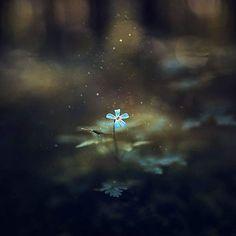 © Raphaelle Monvoisin • Birth of a Queen •    #forest #flower #macro #proxy #dark #darkness #wood #undergrowth #magical #light #nature #naturephotography #aby_nature #explore #jura #keepexploring #raphaellemonvoisin #raphaellem #zeinberg #talentsgp2017_nature