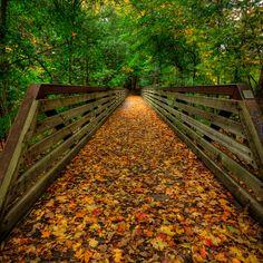 Autumn Bridge, Toronto, Canada. #fall #autumn #Canada